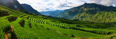 Rice Terraces in the Valley (SuperG82) Tags: vietnam northviethan sapa rice riceterraces valley sunrise blackhmong