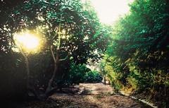 Fundo Hass (Yayo Lopez Fotografa) Tags: inmobiliaria estilodevida terrenos campo sensaciones atmosfera luz