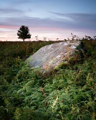 Birchen Edge Afterglow (Russell J-D) Tags: landscapes landscape landscapephotography peakdistrict derbyshire rock tree sunset afterglow beautiful