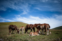 Campo Imperatore (francesco_if ) Tags: campoimperatore horses sky clouds blue cavalli mountain montagna outdoor