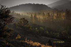Sun finally breaks through Fog (wfgphoto) Tags: camping colorado mountains fog cold humid