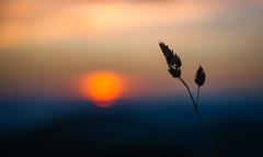 Sunset Art. (TM Photography Vision) Tags: basel riehen schweiz sony alpha 850 a850 sigma 2470 28 ex dg hsm jura basler solothurn sonnenuntergang art sunset landscape beautiful color bern colorart foto