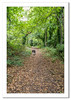 Lucy wandering in the woods on Battery Point (Travels with a dog and a Camera :)) Tags: lightroom cc england woods border collie 2016 battery point september photoshop 2015 woodland trees path digital dog bitch north somerset tamron af 18200mm f3563 xr di ii ld asperical if macro pentax k5 mixed art south west justpentax portishead uk batterypoint bordercollie lightroomcc mixedcollie northsomerset pentaxart pentaxk5 photoshopcc2015 southwest tamronaf18200mmf3563xrdiiildaspericalifmacro unitedkingdom gb