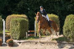 DSC01778_s (AndiP66) Tags: aespli derby hindelbank springen 2016 pferd horse schweiz switzerland kantonbern cantonberne concours wettbewerb horsejumping springreiten pferdespringen equestrian sports pferdesport sport sony sonyalpha 77markii 77ii 77m2 a77ii alpha ilca77m2 slta77ii sony70400mm f456 sony70400mmf456gssmii sal70400g2 andreaspeters bern ch september