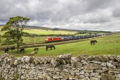 Horsepower in abundance (richardheywood29) Tags: horses shap salterwath 4m25 90019 multimodal 90024 fellponies cumbria england malcolm logistics electric train foals