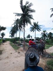 20160929-P9290238 (j12oppa) Tags: elephanttracking pattaya thailand elephants 코끼리트랙킹 파타야 태국