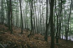 Patterns (kanedo-projekt) Tags: monschau pflanzen wandern dogwood52 eifelsteig eifel zelten dogwoodweek30 wald natur landscape nature pflanze forest