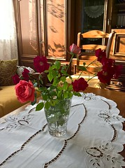 WP_20160927_16_01_12_Rich (vale 83) Tags: roses microsoft lumia 550 colourartaward wpphoto wearejuxt