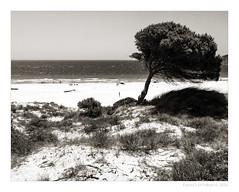 Bolonia (Franci Esteban) Tags: bolonia tarifa cdiz andaluca espaa costa pino arbol playa arena monocrome monocromo