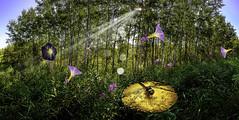 Field of Dreams (Terry L Richmond) Tags: fantasy composite flowers morningglory trees backlit backlight sun sunrays rays mushroom dragonfly canon6d canon1740