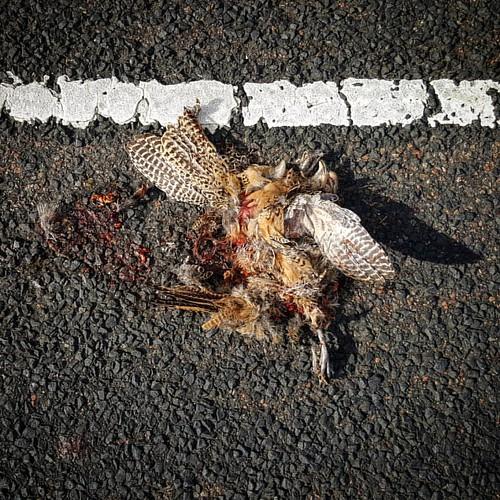 Roadkill Multiple
