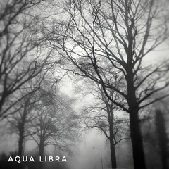 White world {EXPLORED} (Aqua Libra) Tags: fog trees morning square 500x500 bnw blackandwhite beautiful nature netherlands samsunggalaxys6 mist white world