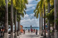 Alle - Philipsburg - [Sint-Maarten] (Thierry CHARDES) Tags: voilier palmiers sigma1750mmf28 antilles carabes caribbean paysbas nederland
