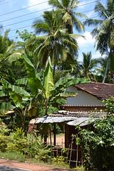 Hidden in the green, Anuradhapura, Sri Lanka (sadat81) Tags: city ancient asia cities tropical tropic srilanka ceylon lankan southasia anuradhapura sinhalese anuradapura singalese