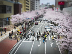 Tama Plaza Sakura (avphoto.ca) Tags: street flowers people blur japan season walking miniature spring crossing mini pedestrians sakura cherryblossoms yokohama tamaplaza tiltshifteffect