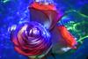 rose trip (emellin66) Tags: longexposure roses lightpainting flower bouquet booyah flashlights sooc