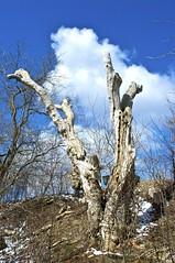 (Pierre Éthier) Tags: montréal montreal paysage treesubject d300s nikond3oos