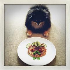 Harlow wants the bear (Andrea Kang) Tags: bear pom snack teddybear thief harlow pomeranian blacktan iphoneography instagramapp uploaded:by=instagram