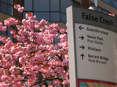 False Creek blossoms (Ruth and Dave) Tags: pink flowers tree sign vancouver cherry spring blossom directions falsecreek arrows
