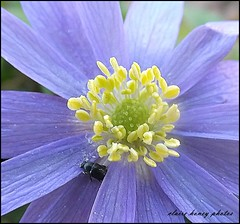 016 (frenchmum) Tags: flowers insect macroshots frameit flowersandcolours flowerarefabulous wonderfulworldofflowers mygearandme rememberthatmomentlevel1 rememberthatmomentlevel2 frameitlevel2