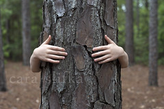 treehugger (cara slifka) Tags: tree cute forest woods hug child squeeze bark environment treehugger