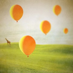 patience is the art of hoping (Janine Graf) Tags: orange balloons whimsy surrealism surreal surrealist giraffe patience hopeful lookbehindyou mobilephotography juxtaposer tiltshiftgen janine1968 iphone4s scratchcam janinegraf iwonderifeddieredmayneisapatientperson
