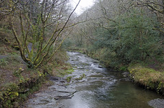 The River Valency (Salopian07) Tags: woodland river cornwall boscastle minsterwood rivervalency