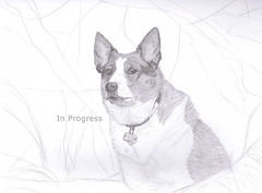 Jinjer - In Progress ( S. D. 2010 Photography) Tags: portrait dog art pencil collie cattle drawing border inprogress lead jinjer