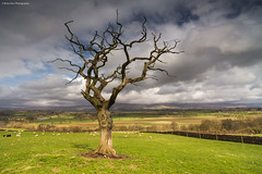 April (.Brian Kerr Photography.) Tags: sky tree clouds canon landscape cumbria ze penrith carlzeiss edenvalley zeiss21mm canon6d distagont2821 briankerrphoto wwwbriankerrphotographycom