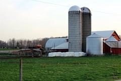Dairy Farm (Pics by Abigail) Tags: red colors field barn canon fence buildings tin evening scenery colorful cows farm gray pasture silos calf redbarn 50mm18 dairyland dairyfarm blackandwhitecows hutches