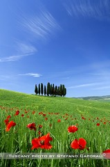 tuscany poppies (tuscany-photo.com) Tags: landscape countryside hill campagna val tuscany crete poppies cypress toscana paesaggio colline papaveri cipressi senesi 0rcia