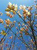light..... (Digital Diary........) Tags: cameraphone park light leaves blossom walk samsung galaxy s3 sthelens merseyside sherdley goodlight sherdleypark