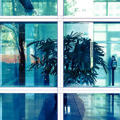 lockdown (ajd808) Tags: california leica windows plant reflection glass architecture oakland downtown f14 broadway down olympus panasonic 1111 omd 25mm