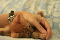 ginger love (marina go) Tags: cute cat kitten kitty cutecat gingercat gingerkitten gingerkitty