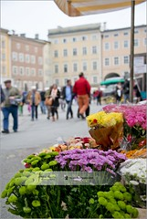 Flower market in Salzburg | Austria (Stefan Cioata) Tags: travel vacation holiday tourism beautiful photography marketing europe view image sale exploring details great joy visit explore most sight lovely top10 iconic available advertise touristical