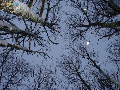 CZ-Platania-Nevicata sul Reventino 20_L