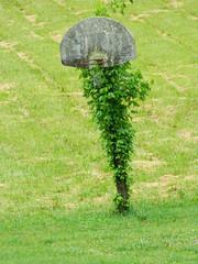 fields-7.JPG (wildrosetn39) Tags: flowers plants tree bush shrubbery elementsorganizer