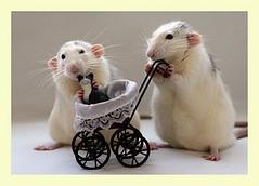 With care (Dona Mincia) Tags: baby cute art animal cat toy mouse brinquedo humor mice gato cuteness fofo rato carrinho nen gracinha ratinho maternalinstinct
