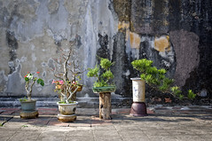Vietnam Day 5 (BrnKng) Tags: city flowers winter vacation plants flower tree tourism wall amazing ruins war tour historic vietnam forbidden imperial vase hue planted 2013