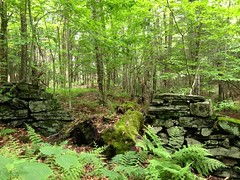stone wall (jessamyn) Tags: wall rocks vermont stonewall randolph randolphvt stockfarm threestallion