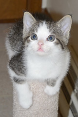Noodles' post ([jonrev]) Tags: saved wild pet cats baby animal cat living kittens front neighborhood domestic porch shelter adopted rescued feral