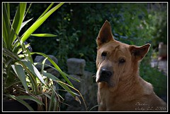 Daiko (patrick.verstappen) Tags: daiko topmodel garden belgium flickr facebook gingelom google d7100 sigma summer photo picassa pinterest pat portrait ipernity ipiccy yahoo