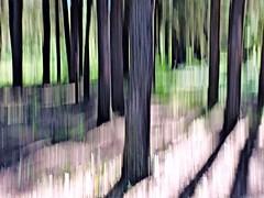 In the Pines (ebergcanada) Tags: arborealimpressions icm abstract intentionalcameramovement forest tree nature alberta fortassiniboinesandhills