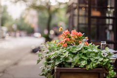 Tranquil (ninasclicks) Tags: flowers bokeh dof street