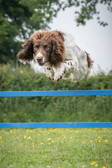 Dog Photography by Gerry Slade-1037 (Photography By Gerry Slade) Tags: dogphotographer gerryslade wwwgerrysladecouk