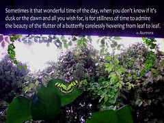 The Butterfly Poem (Aurrora) Tags: aurrora poem butterfly nature wildlife insect butterflypoem poetry ivy emozioni emotion thought summer verse