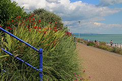 Eastbourne Lammas Festival 2016 (Daves Portfolio) Tags: eastbourne lammasfestival 2016 lammas beach sea englishchannel