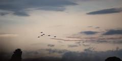 flying machines (keith midson) Tags: raaf roulettes tasmania hobart sky aeroplanes stuntplanes planes aircraft formation sigma 150500mm