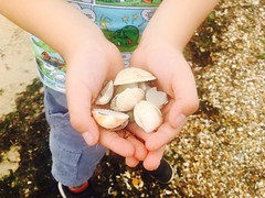 This boy's got shells (imcountingufoz) Tags: summer coast uk hampshire seaside nature shells beach child boy