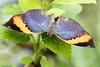 K46A8064 (Yvonne23021984) Tags: schmetterling butterfly hamm germany deutschland maxipark markro photography macrophotography canon canonphotography markofotografy canoneos7dmarkii insects insekten nature naturfotografie naturephotography closeup colorkey schmetterlinge butterflies